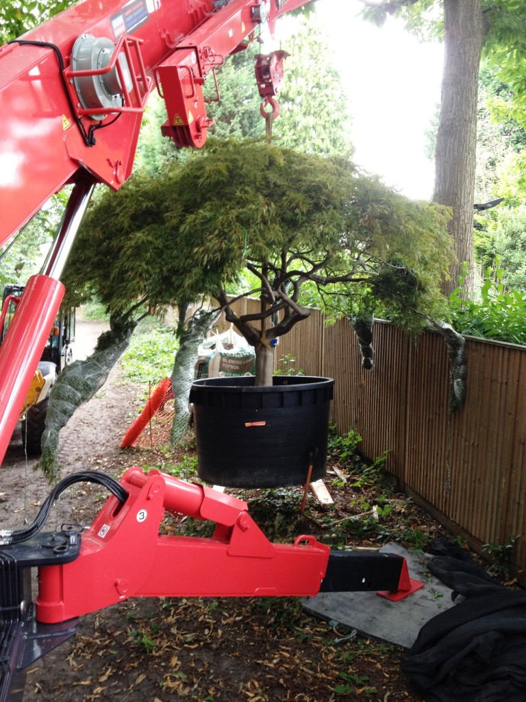Crane hired to lift tree