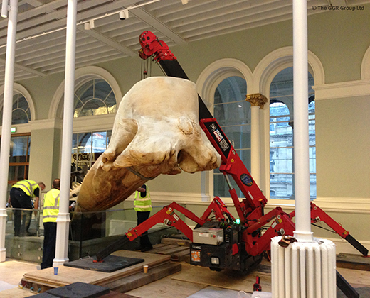 UNIC URW-095 lifting whale skull at National Museum of Scotland