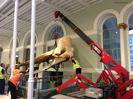 UNIC mini crane lifts whale skull exhibit in position